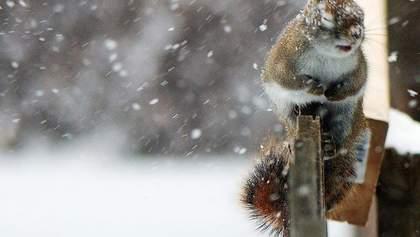 Прогноз погоды на 12 февраля: в Украине будет дождь, снег и ветрено