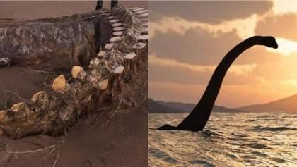 На шотландський пляж винесло гігантський хребет невідомої істоти: фото