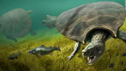 Рештки гігантської черепахи знайшли у Південній Америці: фото