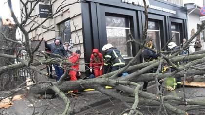 У Кропивницькому через негоду впало дерево, постраждала жінка: фото