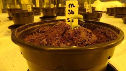 Рослини у марсіанському ґрунті можуть рости краще, ніж у земному: створили цікаве рішення