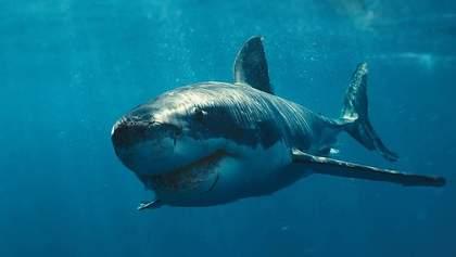 Облаяв і побив, – пенсіонер розповів, як врятувався від білої акули