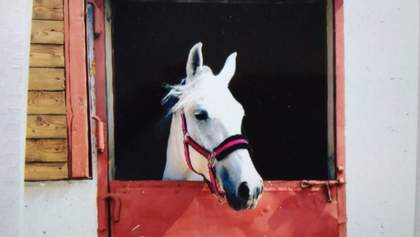 На Харківщині вкрали чотирьох коней: правоохоронці з'ясовують всі обставини