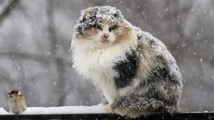 Прогноз погоды на 30 марта: в Украину идет значительное похолодание и снег