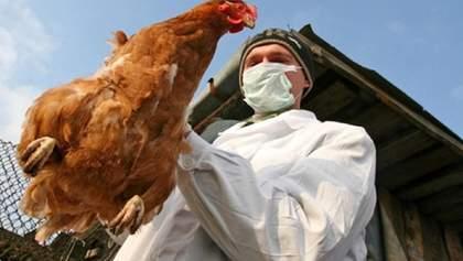 Несколько стран сняли с Украины ограничения на экспорт мяса птицы: список
