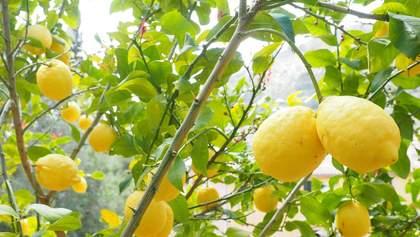 Чи можуть зникнути лимони з українських маркетів