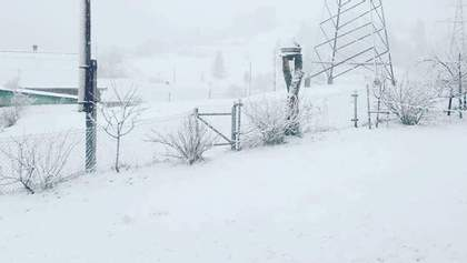 Україну посеред весни засипало снігом: у Карпатах снігопад – фото, відео