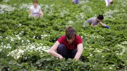 В Западной Европе гастарбайтеров для сезонных работ привозят чартерами