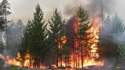 У Карпатському національному природному парку спалахнула пожежа