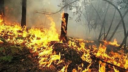 Из-за аномальной жары в Сибири загорелись сотни гектаров лесов