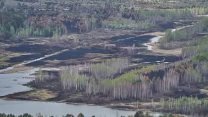 Як повертатимуть до життя Чорнобильську зону після масштабних пожеж: деталі