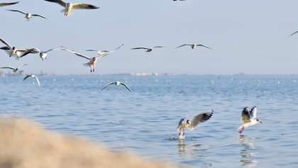 У Бердянську планують відкриття туристичного сезону