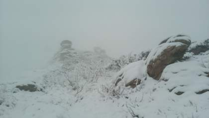 Зима в мае: в Карпатах выпал снег и свирепствуют метели – видео