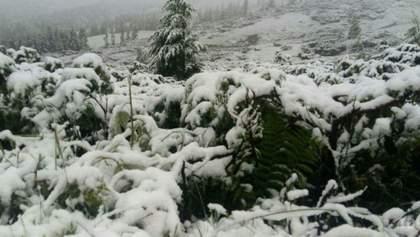 До 35 см снега прогнозируют в Карпатах