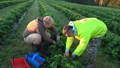 Італія хоче легалізувати трудових мігрантів: чим це загрожує Україні