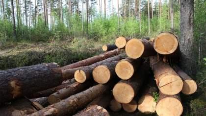 В Україні через вирубку лісу зникають червонокнижні тварини та рослини, – WWF