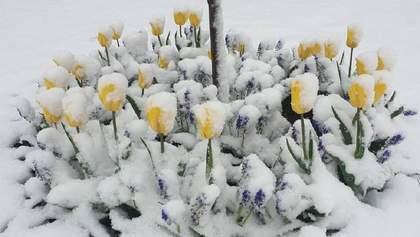 Европу завалило снегом: циклон направляется в Украину – фото, видео
