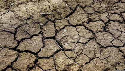 В Одеській області найсильніша посуха з 1947 року: страшна загроза врожаю