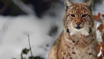 Україні потрібна стратегія збереження біорізноманіття і середовища існування видів тварин, – WWF