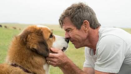8 чудових комедій, після яких хочеться завести собаку