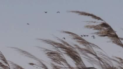 Чайки-реготухи масово оселилися на узбережжі Азовського моря: видовищне відео
