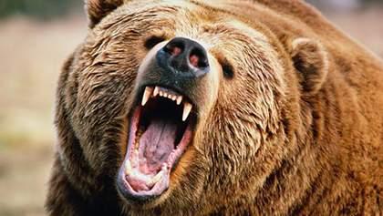 Вкусив і втік у ліс: у Росії величезний ведмідь напав на чоловіка – відео