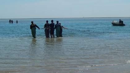На Херсонщині рятували дельфінів, що потрапили у пастку: фото і відео