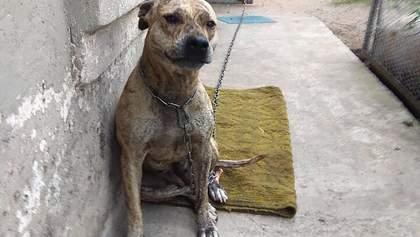 Скандал с продажей собаки на аукционе: почему Минюст отбирает животных у их владельцев