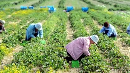 Польща відмовилася від карантину для сезонних працівників з України