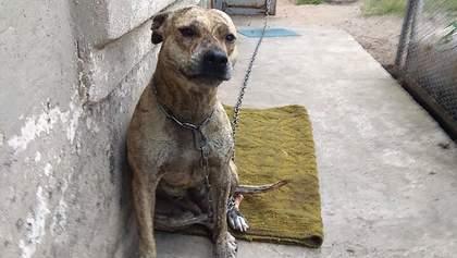 Минюст продал конфискованную собаку: какая впечатляющая сумма победила на аукционе