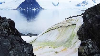 Антарктика стає зеленою і це видно навіть з космосу: фото