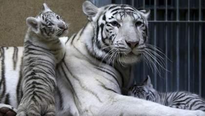 Рідкісні білі тигри та мавпенята: у зоопарку в Бердянську стався бейбі-бум – милі фото, відео
