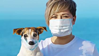 Довели, що собака може заразитися коронавірусом від людини