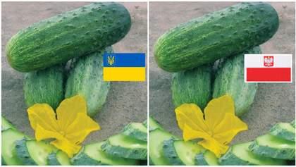 """Украинские огурцы """"под прикрытием"""" и штраф на миллиард: громкий скандал в сети Biedronka"""
