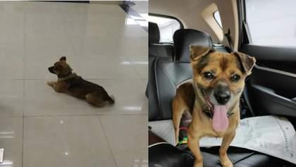 Собака 3 місяці чекав у лікарні на свого господаря, який помер від COVID-19: зворушлива історія