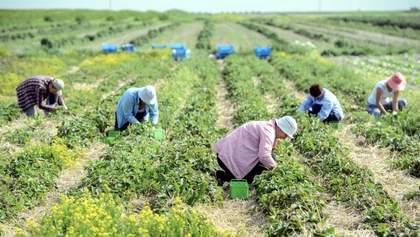 Українські заробітчани повертаються в Польщу, зарплата значно зросла, – Rzeczpospolita