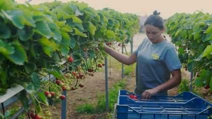 Армія безробітних: чому українці готові працювати за кордоном вже після карантину