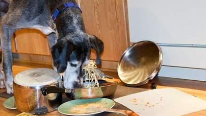 Собака чи кіт у квартирі: як облаштувати кухню