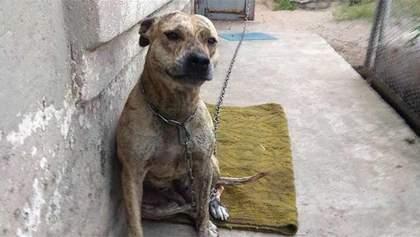 Судьба Торы: что сейчас с собакой, которую Минюст продавал на аукционе
