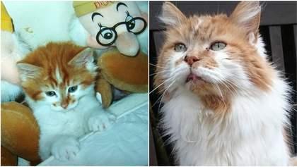 Помер найстаріший кіт у світі, він прожив 31 рік