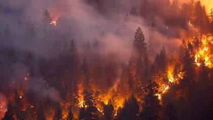 Масштабные пожары в Сибири: почему российские власти отказываются тушить лесные возгорания