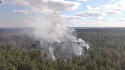 На Луганщине потушили пожар, который вспыхнул в лесу в результате обстрела: фото, видео