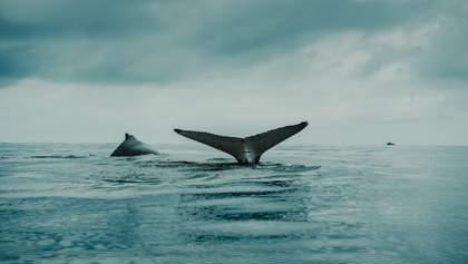 Огромный кит ранил двух женщин возле побережья Австралии: детали