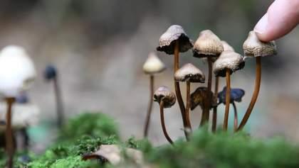 Канадцам впервые за полвека разрешили употреблять психоделические грибы