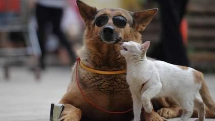 Это коррупционная схема: чем опасен законопроект об обязательной регистрации домашних животных