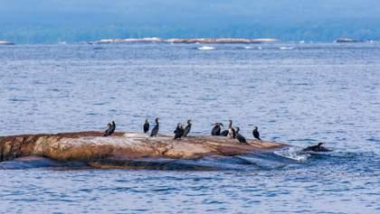 Берег покрыт черными бакланами: на побережье обнаружили мертвых птиц