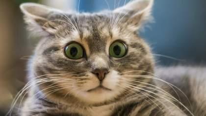 Подозревают бешенство: на ребенка посреди улицы напал кот