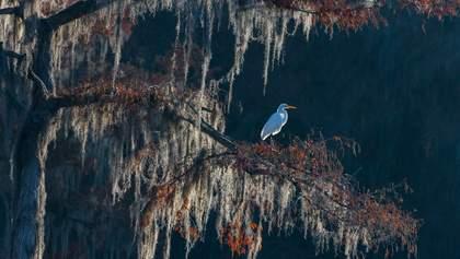Удивительные фото птиц 2020: впечатляющая подборка
