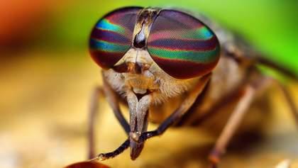 У Франції літній чоловік підірвав свій будинок, намагаючись вбити муху