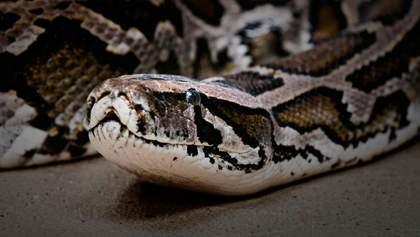 """Небезпечні """"справи"""": У Таїланді змія вкусила хлопця за пеніс, поки той був у туалеті – відео"""